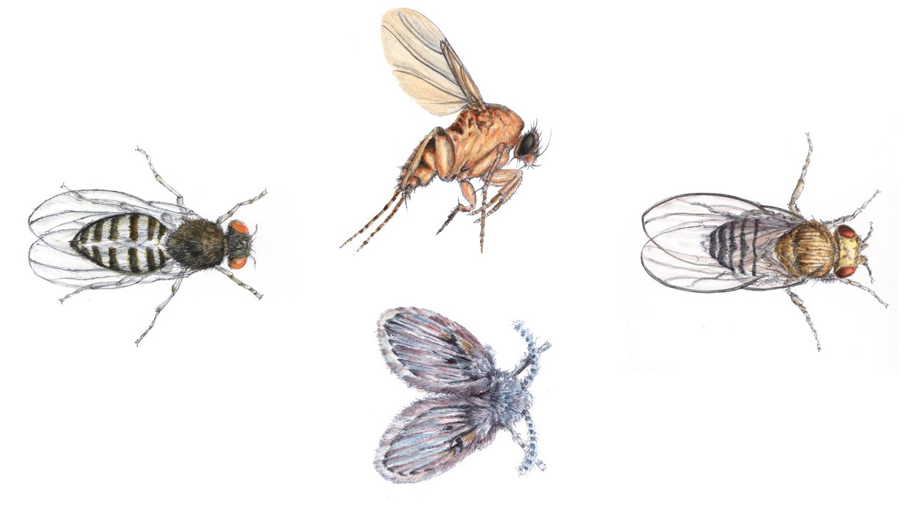 Prevention Of Small Flies Youtube