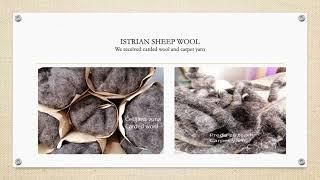 1st European Wool Day | Istrian sheep