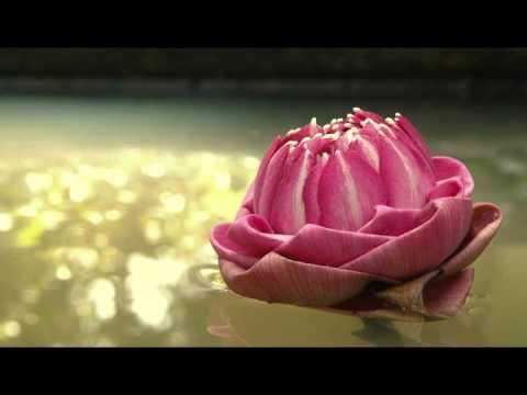 The Lotus Sutra (妙法蓮華經) Diệu Pháp Liên Hoa Kinh