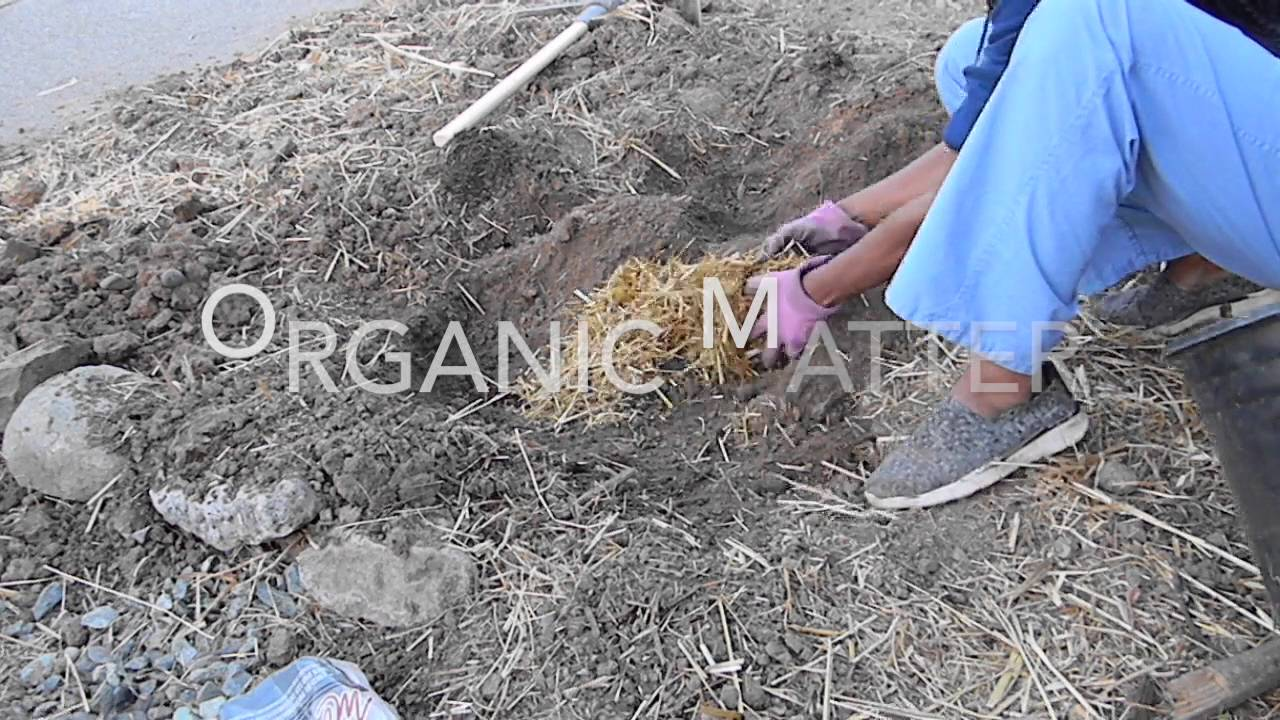 how to amend clay soil organically youtube