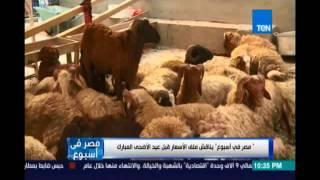 حسين هيكل :مشروع البتلو في التسعينات كان هيقضي علي مافيا اللحوم لكن تم القضاء عليه بفعل فاعل