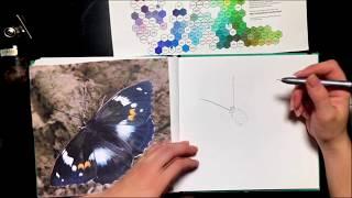 Скетч-Урок: Бабочка маркерами. Переливница Шренка.