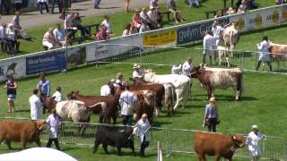 Gwartheg Byrgorn - rhan 1 | Shorthorn Cattle - part 1