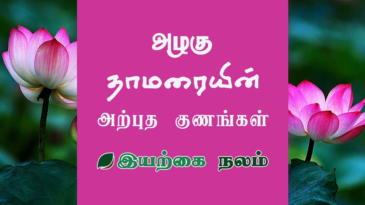lotus flower lotus flower uses in tamil thamarai benefits mightylinksfo