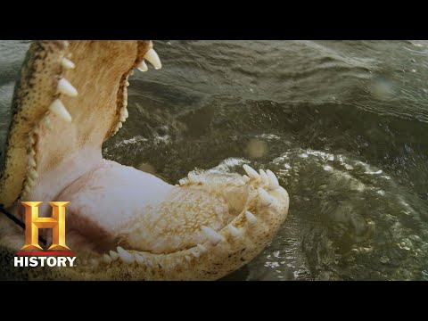 Swamp People: A Cannibal Gator Bullies Joey and Zak (Season 10)   History