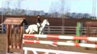 14.2 pony Iron FX jumps 1.30