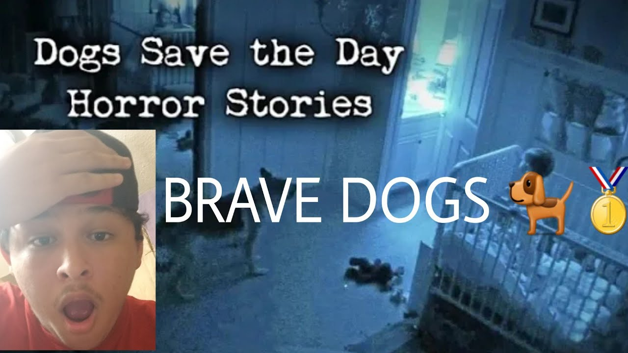 4 Scary Stories Where Dogs Saved The Day Reaction Courageous Ass Dogs Youtube Disney+ is the exclusive home for your favorite movies and tv shows from disney, pixar, marvel, star wars, and national geographic. youtube