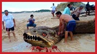 WORLD BIGGEST PET- Top 10 Most Dangerous Sea Creatures