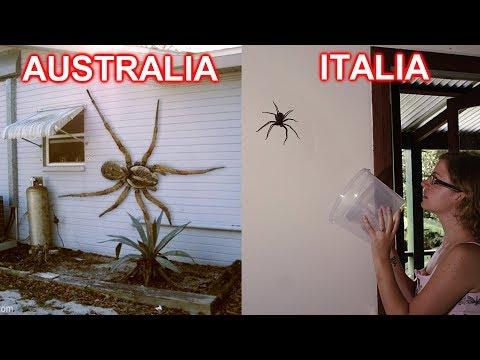 5 BUONI MOTIVI per non andare in AUSTRALIA