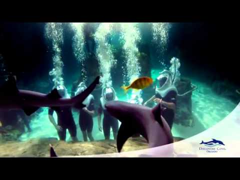 2015 Discovery Cove Overview