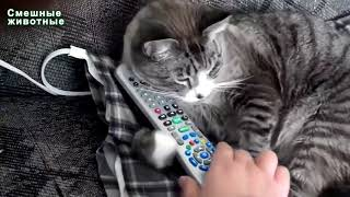 Animals are so funny they should be called funnymals   Funny animal compilation 11