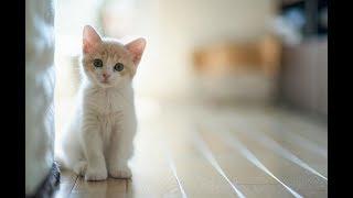 Прикол с Кошкой - Смешная кошка, прикол про кошку 2018