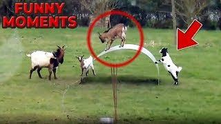 FUNNY ANIMALS 😻🐶😁 FUNNY  MOMENTS 🤣😂 Try Not To Laugh Challenge 😍 - 56