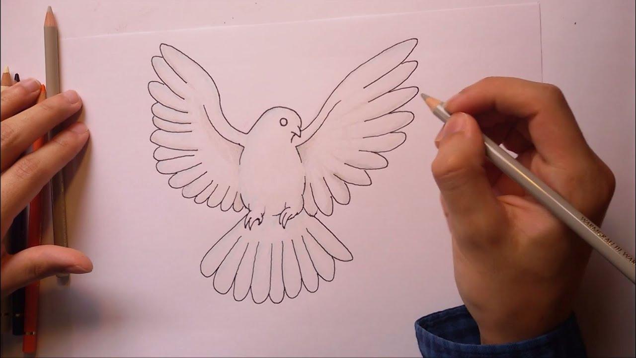 Wie malt man eine Taube  Friedenstaube   YouTube