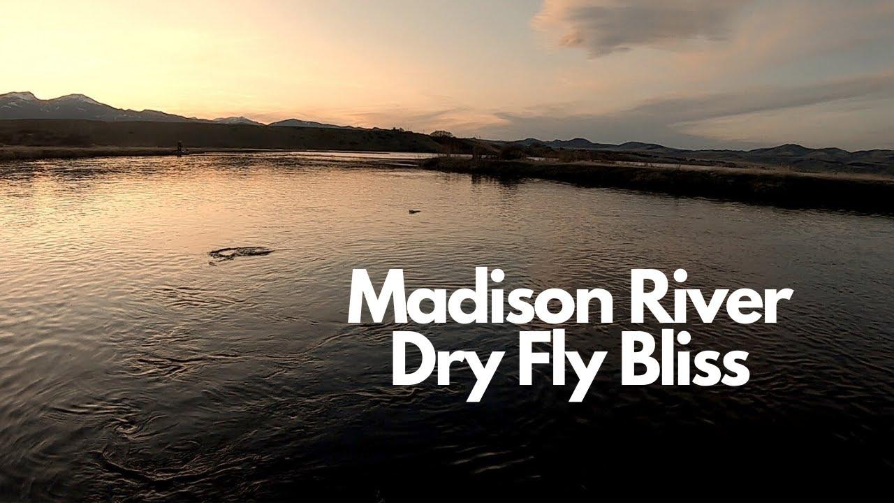 Dry Fly Euphoria
