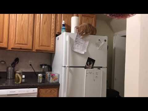 Maxwell and Friends Blog - Tabby Cat Takes Magnets Off Fridge