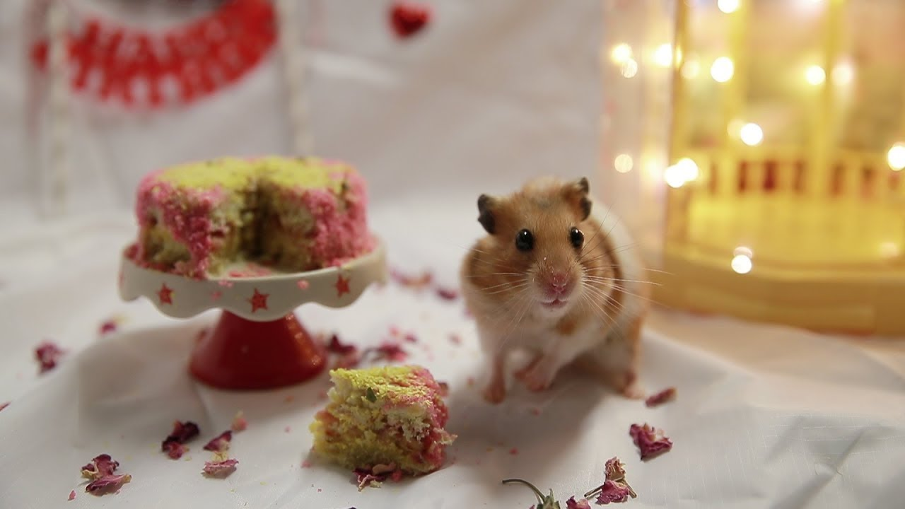 Hamsters Birthday Party With Homemade Sunflower Cake Youtube