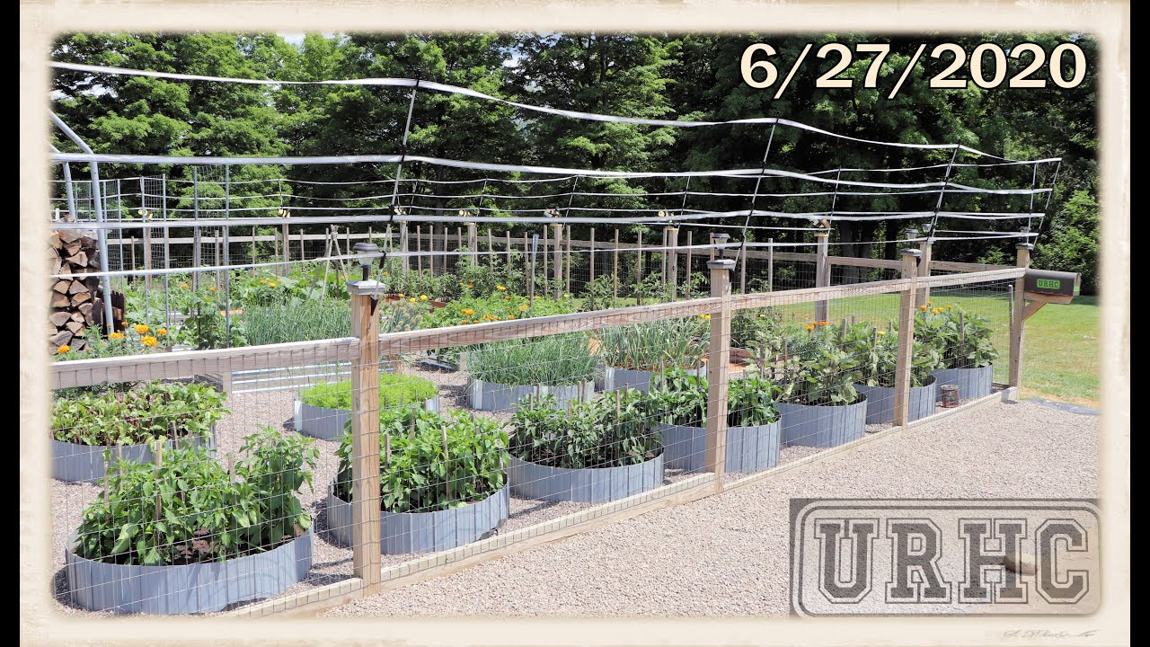 Garden 2020 Part 4 Got Deer, Time To Raise The Fence And Updates