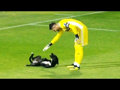 Los Momentos más Graciosos del Fútbol | Animales en el Fútbol