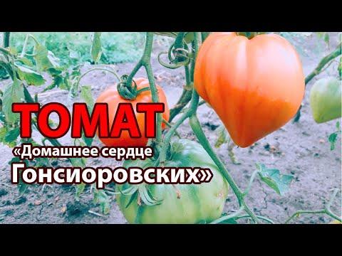 Томат от Гонсиоровских! Полный обзор сорта