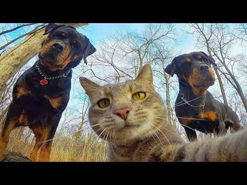 😁-funniest-🐶-dogs-and-😻-cats---awesome-funny-pet-animals'-life-videos-😇