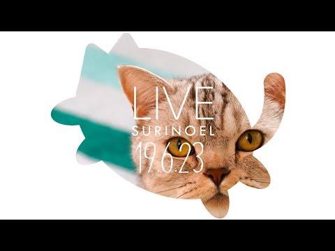 수리노을  고양이가족 19.6.23 LIVE 【SURI&NOEL】