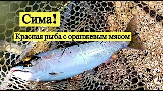Сима! Красная рыба с оранжевым мясом