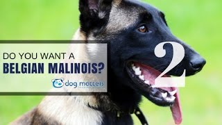 Do You Want A Malinois - Part Two - How To Malinois