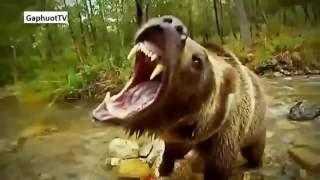 Nhạc thiếu nhi, Thế giới động vật