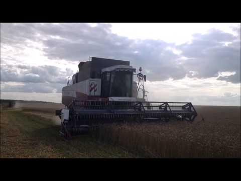 жатва 2014 в оао Леднево. Harvest 2014 JSC Lednevo.