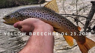 Fly Fishing the Yellow Breeches Creek!!! Pennsylvania Trout Fishing 2018