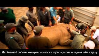 Летящий носорог (Flying Rhinos)