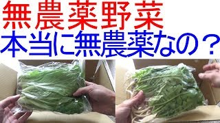 無農薬野菜は本当に無農薬なのか実験をしました thumbnail