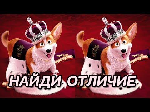 Найди отличие между картинками: Королевский корги