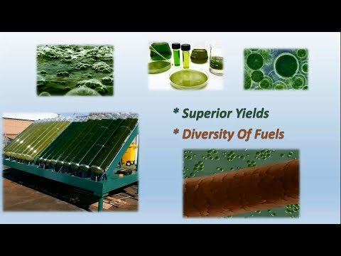 Lec 3 3rd Generation Algae Biofuels P1
