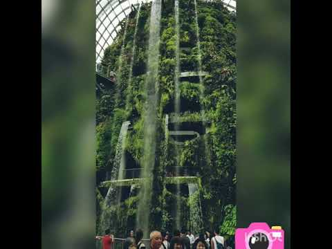 Singapore | Gardens By The Bay | People | Waterfall | Most Viewed | Green plants