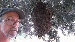 marion county beekeeper does free bee removal