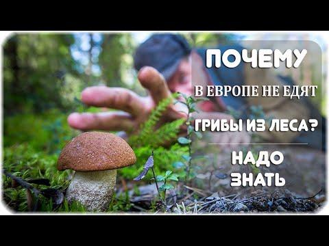 Почему грибы из леса, в основном, едят в России и странах бывшего СССР?