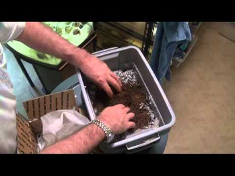 Raising Earthworms - Buying the worms to start with