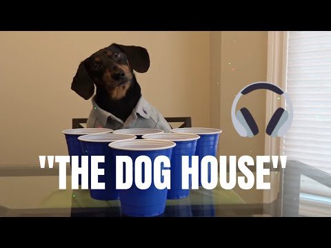 Crusoe the Dachshund - Welcome to The Dog House