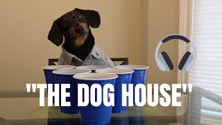 Video Crusoe the Dachshund - Welcome to The Dog House [Official Video] download MP3, 3GP, MP4, WEBM, AVI, FLV November 2017
