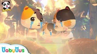 *NEW*숲속에 불이났어요!미미가족 구해줘요!|키키묘묘 구조대 출동~!|베이비버스 인기동요 모음|BabyBus