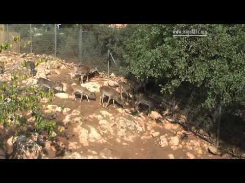 Jerusalem's Biblical Zoo