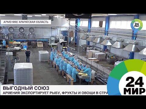 Выгодный союз: Армения экспортирует в ЕАЭС рыбу, фрукты и овощи - МИР 24