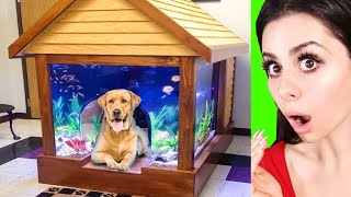 GENIUS Pet Inventions you won't believe exist !