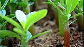 ШОК !!! Что вырасло из семян заказанных в Китае на Aliexpress .