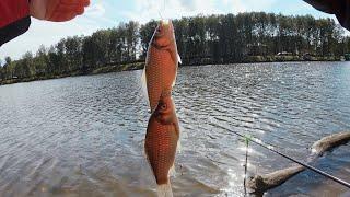 ХЕРАБУНА Ловим много карася Сравниваем Китайский и Российский глютен Рыбалка с Fishingsib