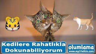 Kedi Korkusu Yenme: Kedilere Rahatlıkla Dokunabiliyorum Olumlama