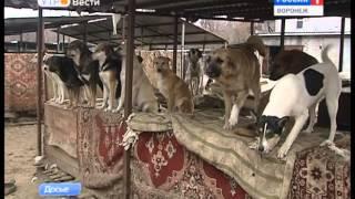 В Воронеже за счёт бюджета построят приют для бездомных животных