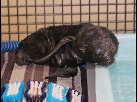 Friday Fur Seal Pup Hangout!